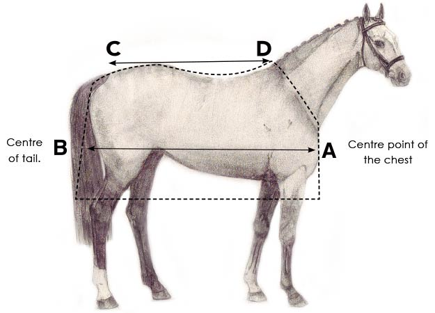 horse size how to fit 2